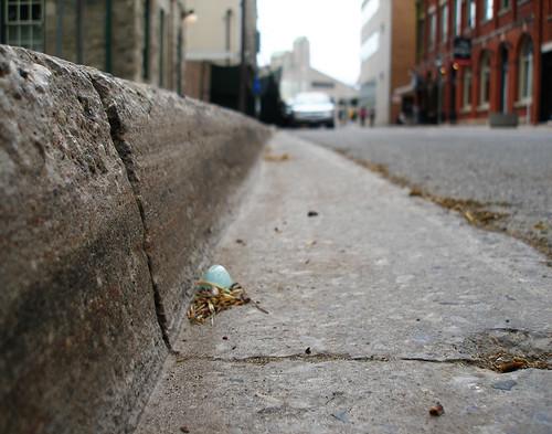 douglas street egg