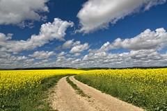 Primavera en Castilla (Leonorgb) Tags: flores primavera canon camino leo amarillo cielo nubes campo castilla palencia colza