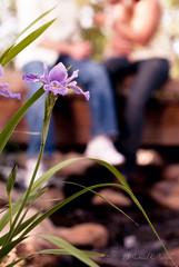 Leisure Lavendar (Proleshi) Tags: park portrait woman man blur flower guy love girl portraits 50mm engagement nikon couple sitting dof natural bokeh outoffocus 50 lavendar d300s 50mm14afs proleshi