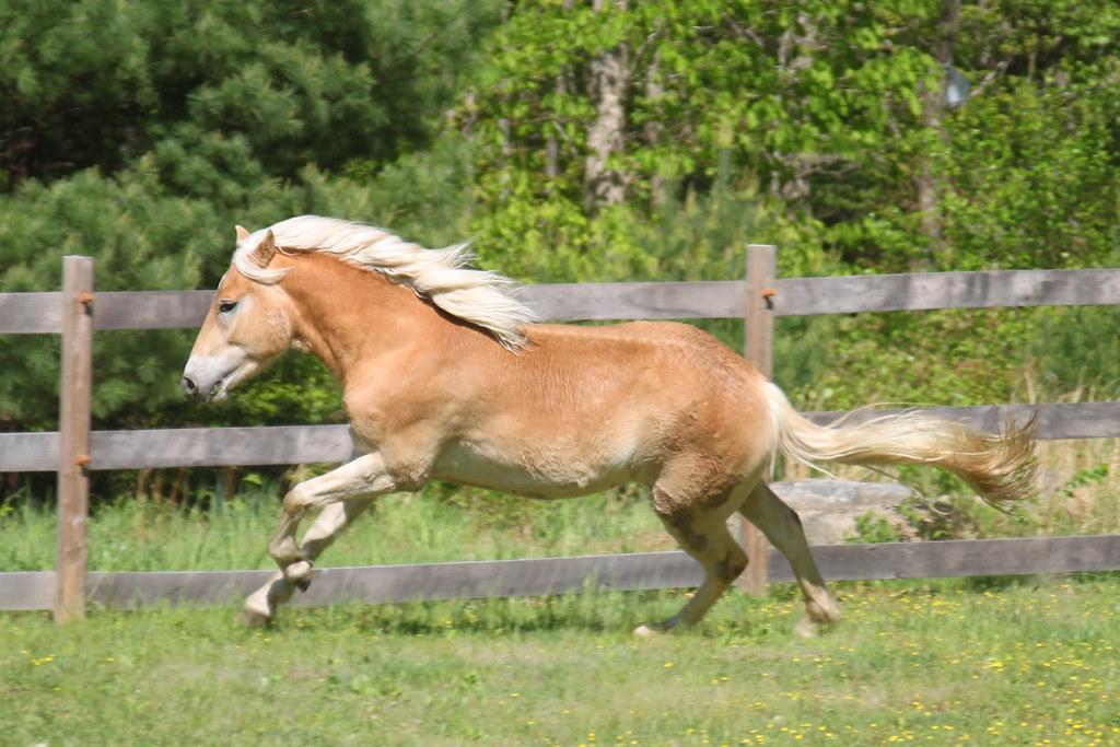 horses 141x