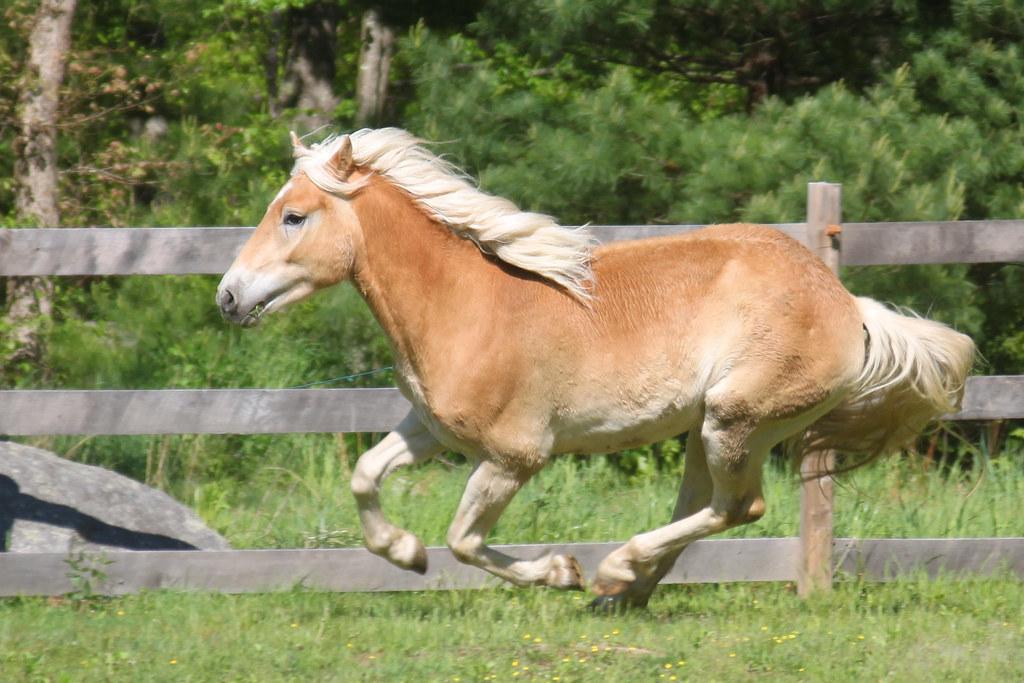 horses 142x