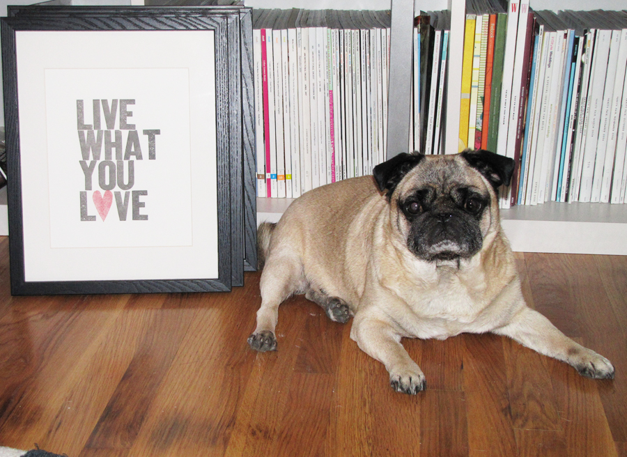 Pug+Live What You Love