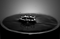 More Water Splashing / Drops (Just Another Wretch) Tags: bw macro water shadows dof depthoffield whitebackground splash waterdrops watersplash monochomatic t2i canont2i