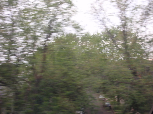 Trees Alongside the Train