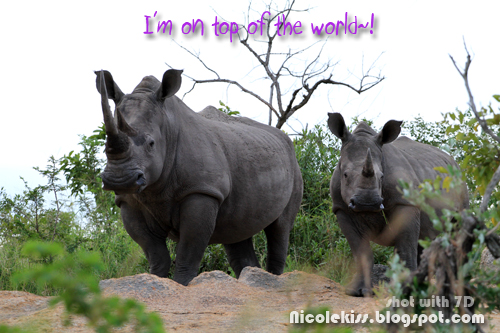 mommy and baby black rhino