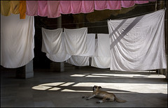 Let sleeping dogs........ (Dave_Davies) Tags: restaurant havana cuba laundry habana washing paladar laguarida