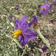 Florecitas azules, bayas naranja ¿quién soy? 3240799842_568a4192e5_m