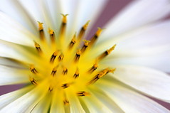 IMG_1671 (Killer App) Tags: plant flower macro home up closeup close