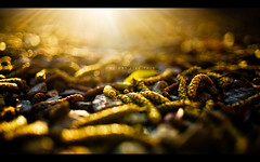One Day Like This (isayx3) Tags: morning light sun tree green rain 35mm nikon rocks warm glare bokeh buds f2 gravel d3 35mmf2af