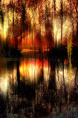 Golden Hour Reflection (KY-Photography) Tags: uk trees light sunset shadow red sky orange ontario canada reflection nature water silhouette yellow night clouds landscape mirror evening scotland pond victoriapark glasgow ky branches sony guelph cybershot ps gb ripples khalid pointshoot allrightsreserved kal gloaming lanarkshire explored dscp12 kyphotography