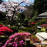 Japanese Garden in Spring Bloom thumbnail