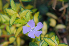Illumination Periwinkle