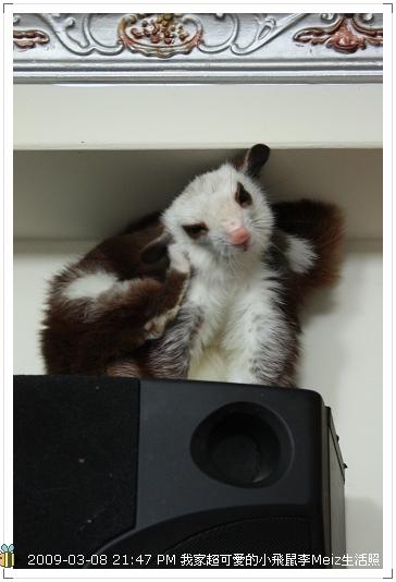 09年二三月小飛鼠Meiz生活照 (9)