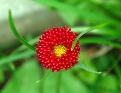 DSC_3044 (akk_rus) Tags: flowers flower nature nikon d80 fantasticflower nikond80 flowerpicturesnolimits overtheexcellence concordians goldstaraward excellentsflowers
