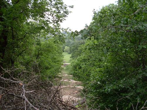 Trail vista, Arbor Hills Nature Preserve