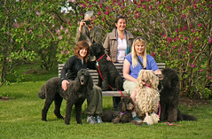(Jean Arf) Tags: tia bench anne claire lisa rochester astrid lilac poodle highlandpark pilgrimage zuzu verena vpc standardpoodle baldr foxxy ppmay0903