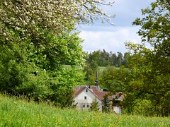 Hidden (Linda6769) Tags: roof flower tree church germany thringen village blossom hill meadow thuringia spire wildflower blte baum appletree dandilion apfelbaum frhling blooming bloomingtree frhjahr blhend churchoutside explored brden blhenderbaum slateshingle treesinspring slateshingled schiefergedeckt bumeimfrhling baumimfrhling