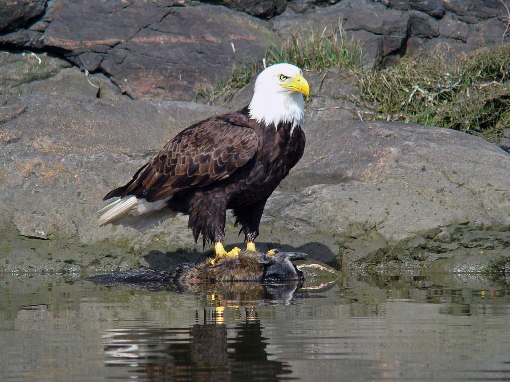 2009-05-03 Portage Inlet 162