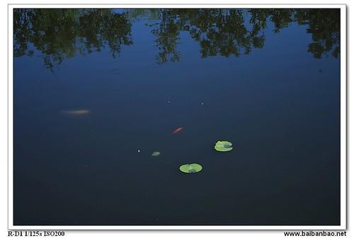 xiang-lake-fish-7237
