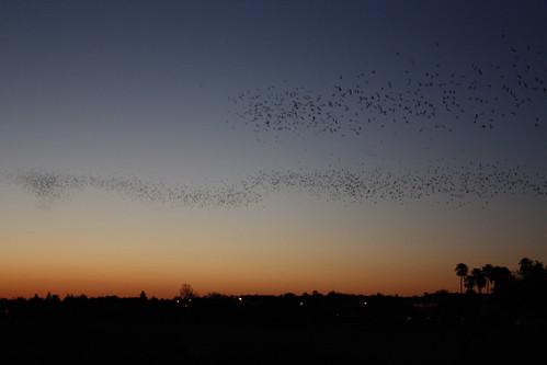 Stream of bats