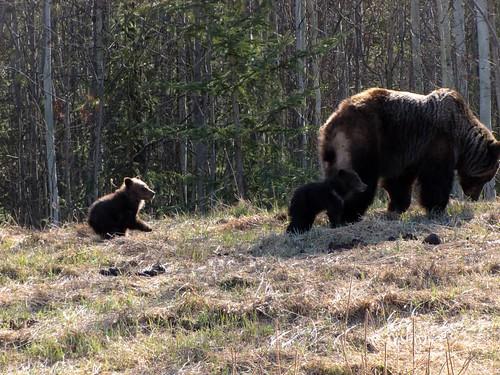 Alaskan Day 10-11