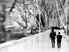 The trees, the umbrella, the men. The hole. (Sator Arepo) Tags: leica trees blackandwhite bw rain lensbaby umbrella turkey reflex istanbul palace rainy topkapi lensbabies digilux digilux3 retofez101214
