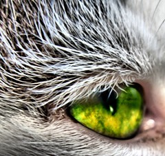 (Mouin.M(away)) Tags: macro green eye closeup cat photoshop chat shot image cs2 picture yeux hdr poils pupille oeuil highdynamic