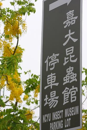 嘉義大學昆蟲館002