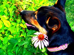 Roxy (basschick89) Tags: dog plant flower roxy