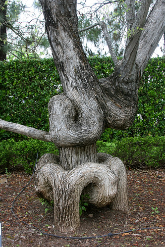 loopy tree