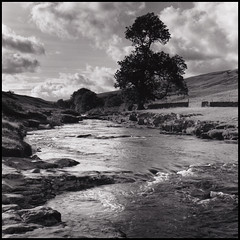 The Wharfe at  Langstrothdale (Daren Smith) Tags: blackandwhite tree 120 film darkroom river print square kodak yorkshire bronica roll sqa tmax100 yorkshiredales scaned wharfe 123bw langstrothdale 80mm28 ilfordmultigrade autaut