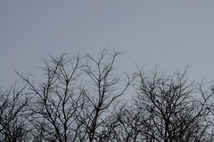 Chroc Tags Trees Sky Laura Valencia Grey Gris Arboles Cielo Crocodile Serra Desnudos
