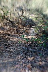 pathway (zebrabelly) Tags: lensbaby brigid 2009 imbolc winter09 february09 imbolc09 brigid09