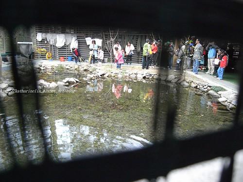 你拍攝的 17復育中心人工水池。