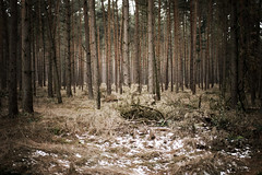 (.ultraviolett) Tags: wood tree forest wooden mnster
