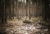 (.ultraviolett) Tags: wood tree forest wooden münster