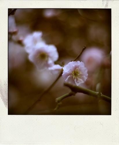 10441 : Plum2009 Polaroid #2
