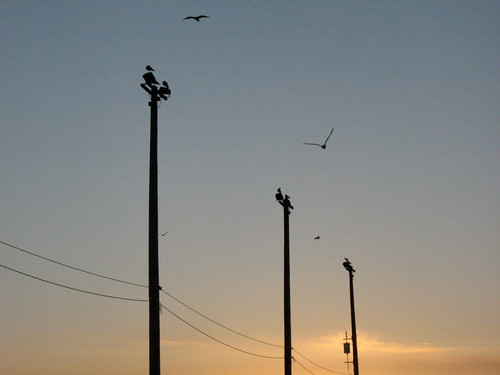 Seagulls and Power Lines