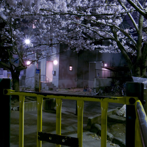 The Blossoms Come out at Night