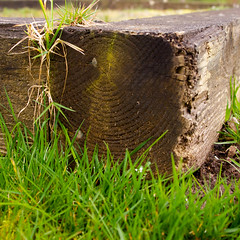 gardenbed (rr_graphic_design) Tags: wood brick green grass wall garden frames greenhouse land environment sell looms rezoned