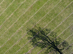Tree (David Thyberg) Tags: above shadow kite tree grass sweden stockholm stripes lawn aerial fromabove getty kap 2009 striped grdet kiteaerialphotography