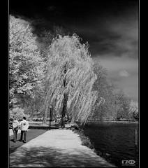 Spring at the lake (Monika Ostermann) Tags: bw sun lake ir switzerland spring wind infrared sw schwarzweiss infraro monikaostermann
