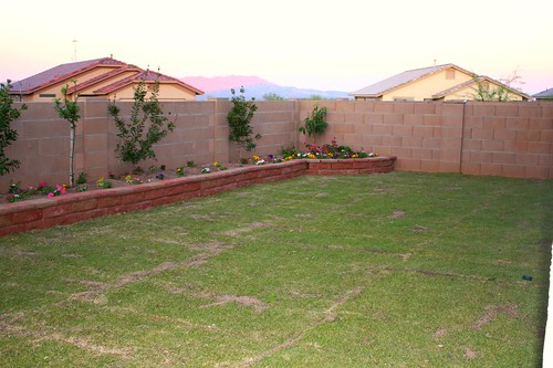 backyard 017