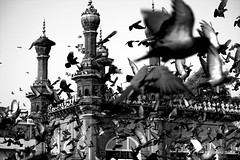 Mecca Masjid - Enveloped (Indro Images) Tags: india heritage birds canon mosque hyderabad mecca masjid daybreak hpc charminar pegions streetpictures canon1855is 40d flickrunitedaward