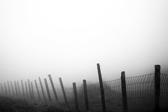 Fog & fence posts. (Ian McWilliams.) Tags: field misty fog fence grey mesh northumberland posts dull