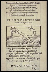 Emblem showing dolphin and anchor from Alciato's emblem book, 1531