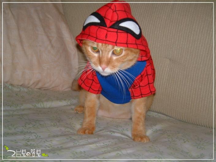 Spider-Cat_03.jpg