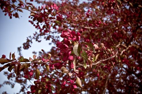mayim bialik (blossom)