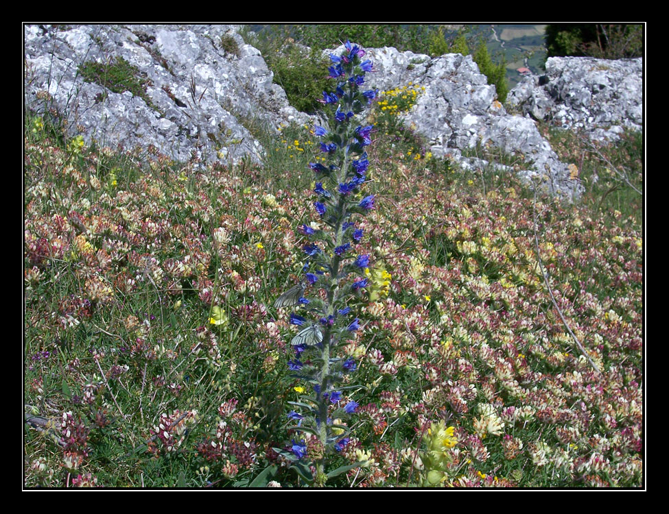Flores y mariposas subiendo al Mortxe
