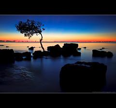 Pass go and collect $200. (Matthew Stewart | Photographer) Tags: blue tree sunrise rocks matthew australia brisbane stewart qld queensland deceptionbay —obramaestra—